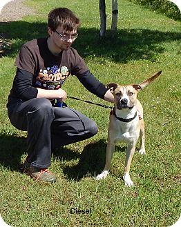 Pit Bull Terrier Mix Dog for adoption in Hibbing, Minnesota - DIESEL