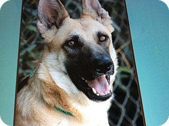 German Shepherd Dog Puppy for adoption in Los Angeles, California - ETTA VON ETTENHEIM