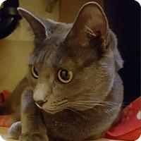 Adopt A Pet :: Mistique (Misty) - Laguna Woods, CA