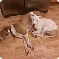 Adopt A Pet :: Hazel - Prospect, CT