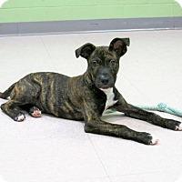 Adopt A Pet :: Tippie - Lufkin, TX