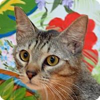 Adopt A Pet :: Jasmine - Englewood, FL