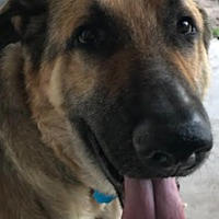 Adopt A Pet :: Michael-Adoption Pending - Dripping Springs, TX