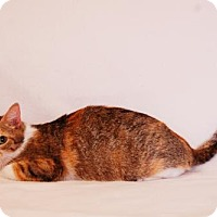 Adopt A Pet :: Yanna - Toccoa, GA