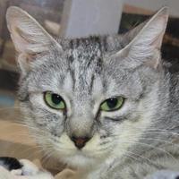 Adopt A Pet :: Heidi - Austin, TX
