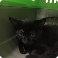 Adopt A Pet :: Binx - Gulfport, MS