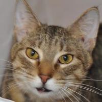 Adopt A Pet :: Marcel - Tilton, IL