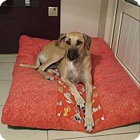 Adopt A Pet :: Nina - Vancouver, BC