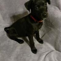 Adopt A Pet :: Constance - Walpole, MA