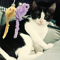 Adopt A Pet :: Ranger - Yorba Linda, CA
