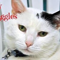 Adopt A Pet :: Snuggles - Alexandria, VA