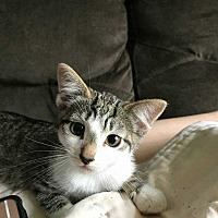 Adopt A Pet :: Squirt - Coopersburg, PA