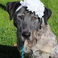 Adopt A Pet :: Hannah - Anderson, IN