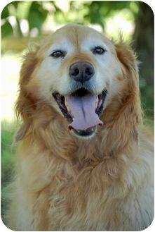 Golden Retriever Mix Dog for adoption in Mora, Minnesota - Buddy