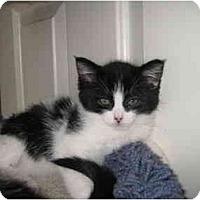 Adopt A Pet :: Cassie - Modesto, CA