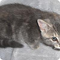 Adopt A Pet :: Tiggy - Richmond, VA
