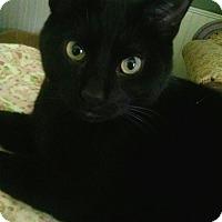 Adopt A Pet :: Kitty Kee - Byron Center, MI