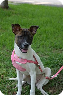 Shepherd (Unknown Type) Mix Puppy for adoption in Sunnyvale, California - Renee