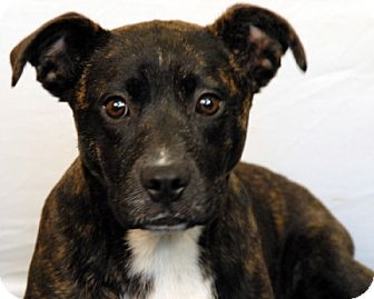 Pit Bull Terrier Mix Dog for adoption in Newland, North Carolina - Tegan
