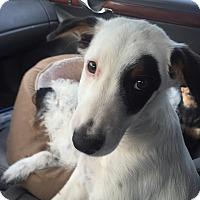 Adopt A Pet :: Chance - Vidor, TX