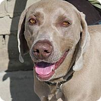 Adopt A Pet :: Roscoe - Sun Valley, CA