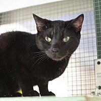 Adopt A Pet :: Kelza - Grinnell, IA