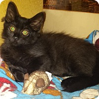 Adopt A Pet :: Kevin - Winchester, CA