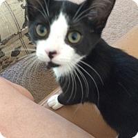 Adopt A Pet :: Raven - Monroe, GA