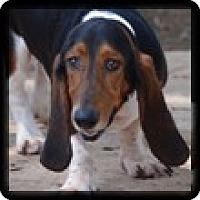Adopt A Pet :: Figgy - Marietta, GA