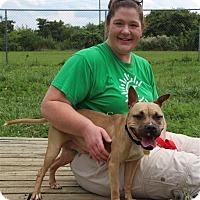Adopt A Pet :: Louisa - Elyria, OH