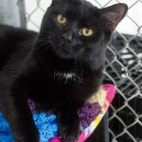 Adopt A Pet :: 36177749 - Greenwood, SC