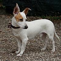 Adopt A Pet :: Flip - Santa Barbara, CA