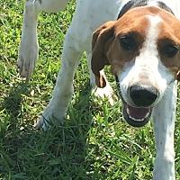 Adopt A Pet :: Molly - Albemarle, NC