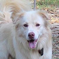 Adopt A Pet :: Jack - Daleville, AL