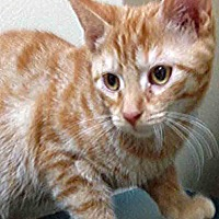 Adopt A Pet :: Dano - Channahon, IL