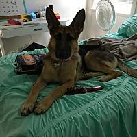 Adopt A Pet :: Gretchen - Cerritos, CA