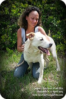 Retriever (Unknown Type)/Labrador Retriever Mix Dog for adoption in Eustis, Florida - Jasper