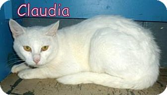Domestic Shorthair Cat for adoption in Georgetown, South Carolina - Claudia