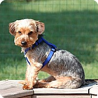 Adopt A Pet :: Harley - Skokie, IL