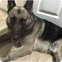 Adopt A Pet :: Nixon - Pike Road, AL