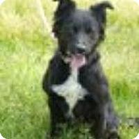 Adopt A Pet :: Sabrina - Phelan, CA