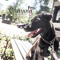Adopt A Pet :: Crayola - New York, NY