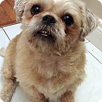 Adopt A Pet :: Sandy - Toronto, ON