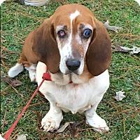 Adopt A Pet :: Daisy - Northport, AL
