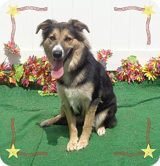 Australian Shepherd Mix Dog for adoption in Marietta, Georgia - NOVAH