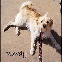 Adopt A Pet :: Rowdy - Upland, CA
