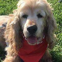 Adopt A Pet :: Frankie - Etters, PA