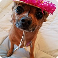 Adopt A Pet :: Ruby Roo - San Diego, CA