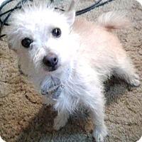 Adopt A Pet :: Ellie-ADOPTION PENDING - Boulder, CO