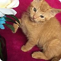 Adopt A Pet :: Morris - Nolensville, TN